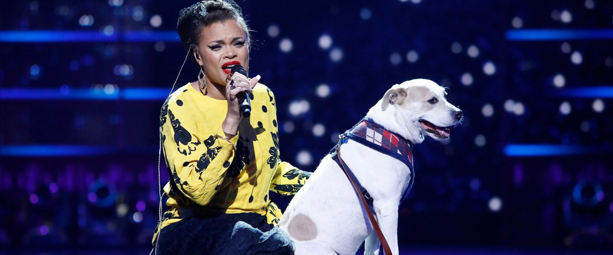 """Andra Day On Her Pup, Lucia: """"She Makes Me Happier!"""""""