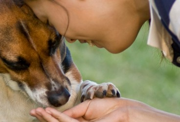 3 Ways a Rescue Dog Can Rescue You