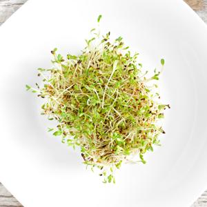 alfafa-sprouts