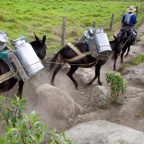 benefits-donkey-milk-nutrition-2