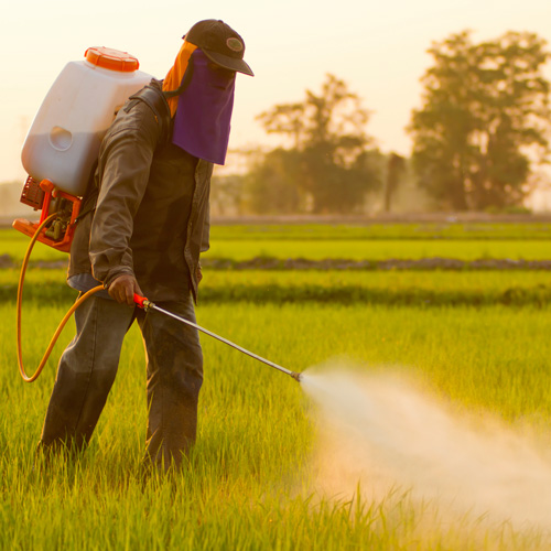 Things-You-Should-Know-About-Systemic-Pesticides-2